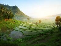 تور 4 شب پوکت + 3 شب بالی